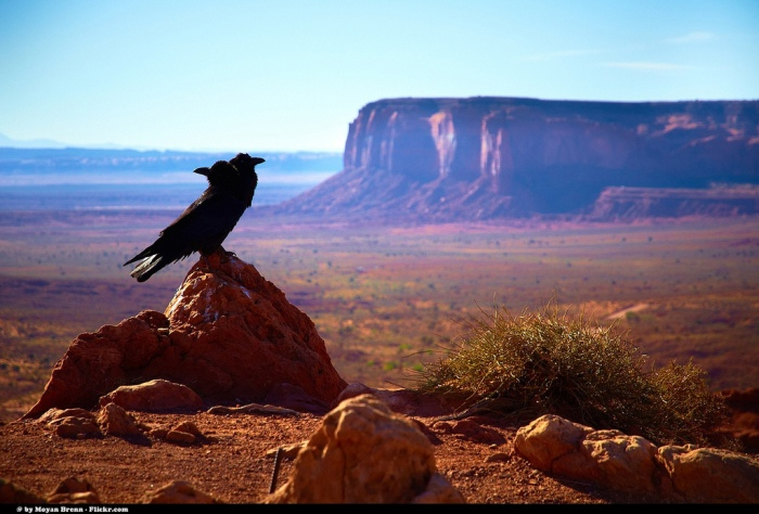 Desert (Moyan Brenn - Flickr)