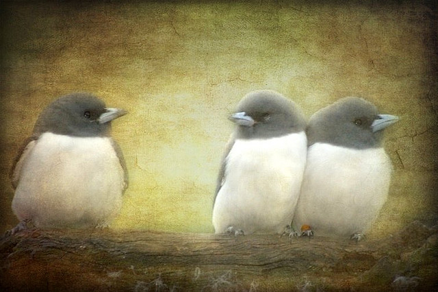 Three's A Crowd by  aussiegall (Flickr)